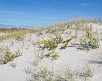 Coastal Photograph, Flowers on a Sand Dune Photo, Beach Art for Wall, Beach Grass, Seashore Art with Yellow Flower, Coastal Palette, Seaside