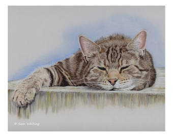 Sleepy Tabby Cat - Limited Edition Giclee Print, 8 x 10 inches