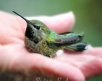 Hummingbird Photo, bird in hand, gifts under 25, hummingbird art, animal photography, fine art print, humming bird lover gift