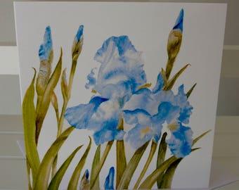 Blue Irises Greetings Card from a watercolour by Pauline Merritt