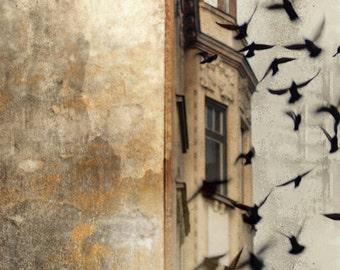 Prague Photography, Gothic Architecture Print, Bohemian Ediface, Birds in Flight, Black Grey Cream Photograph, Wanderlust
