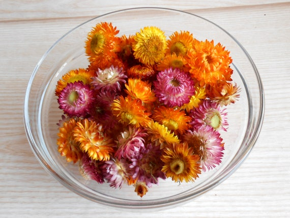 Dried straw flowers mixed size and colors small dried flowers dried straw flowers mixed size and colors small dried flowers strawflowers heads potpourri craft supply home decor diy mightylinksfo