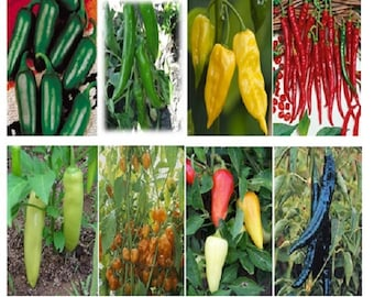 500 Seeds 12 Kinds Of Hot Pepper
