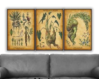 Harry Potter Set of 3 Prints, Mandrake,  Mandragora Print, Mandrake Plant, Herbology Art, Mandrake Print, Mandrake Art, Harry Potter Posters