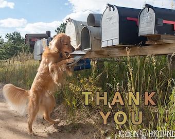 Golden Retriever thank you cards - set of 4