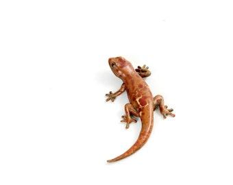Gecko - size 2, mottled brown - Bronze