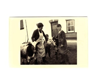 Vintage 1950s Black and White Photograph Mother and Sons with Baby Cows Calves in Farmyard Calf Brothers Social History Old Photo 428
