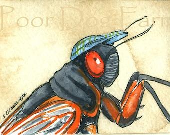 Periodical Cicada  in a hat