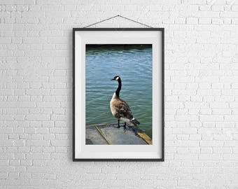 Photo of Goose, Wildlife Photography, Goose on Waterfront, Art for Office, Knoxville Tennessee, Bird Photography, Nature Photograph