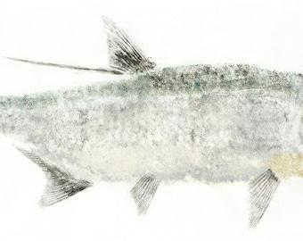 Tarpon Fish Print