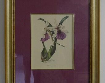 Custom Framed Botanical Paper Print