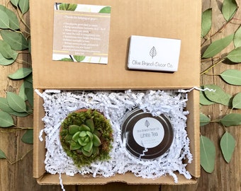 Home Sweet Home Mini Gift Box- a succulent in terra cotta pot and a scented soy candle!