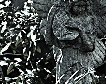 "Cold Angel 8"" X 12"" Kodak Lustre Paper Photo Print CA6099"