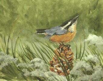 Nuthatch Bird on Pinecone Print