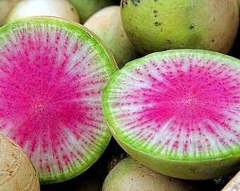 Watermelon Radish, 50 seeds, Asian heirloom, bright pink center, cool weather crop, sweet mild flavor, gourmet garnish