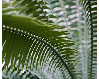 Nature Photography  - Green Print - Axis - Fine Art Photograph - Oversized Print - Fern Art - Alicia Bock - Botanical Art - Palm Print - Art