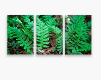 Set of 3 Prints, Triptych Wall Art, Three Panel Wall Art, Set of Prints on Canvas, Green Prints for Wall, Large Botanical Fern Print