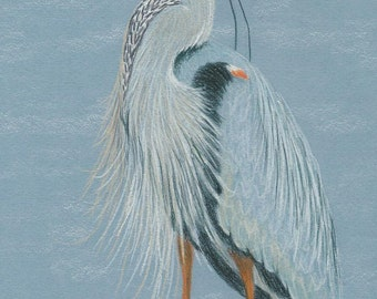 Wading Blue Heron Pattern in colored pencil