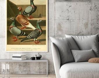 Pigeons Antique Print| Pigeon Art| Vintage Pigeon Print| Pigeon Wall Art| Natural Art| Affiche Oiseau| Birds Wall Art Print| HAP028