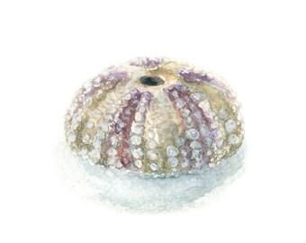 Watercolor Sea Urchin, Sea Urchin Print, Sea Urchin Art