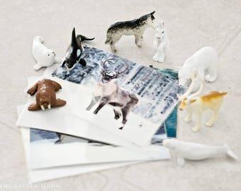 Arctic Animals Montessori Game Printable