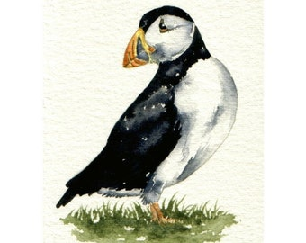 Original Watercolour sketch - Turning Puffin