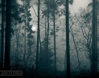 de bossen van #200