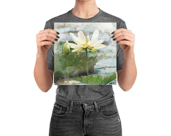 Water Lily Watercolor Print Photo paper poster