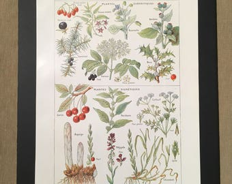 Board naturalist, history & natural sciences - up plants and diuretics - Larousse