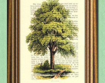 THE OLD TREE - Dictionary art print - Wall art print  - Book print recycled - Art Print Dictionary upcycled