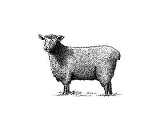 Ewe - Fine Art Digital Giclee Print