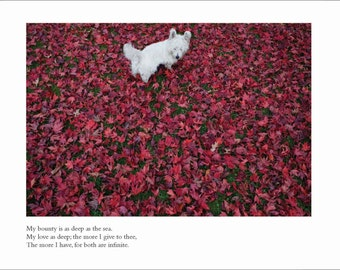 Westie Dog Card - Blank Inside - Anniversary Card - Love Card - Valentine's Day Card - Shakespeare Greeting Card