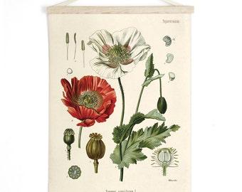 Pull Down Chart - Botanical Papaver somniferum Opium Poppy Print. Educational Diagram Poster from Kohler's Botanical. Flower Garden -CP246cv