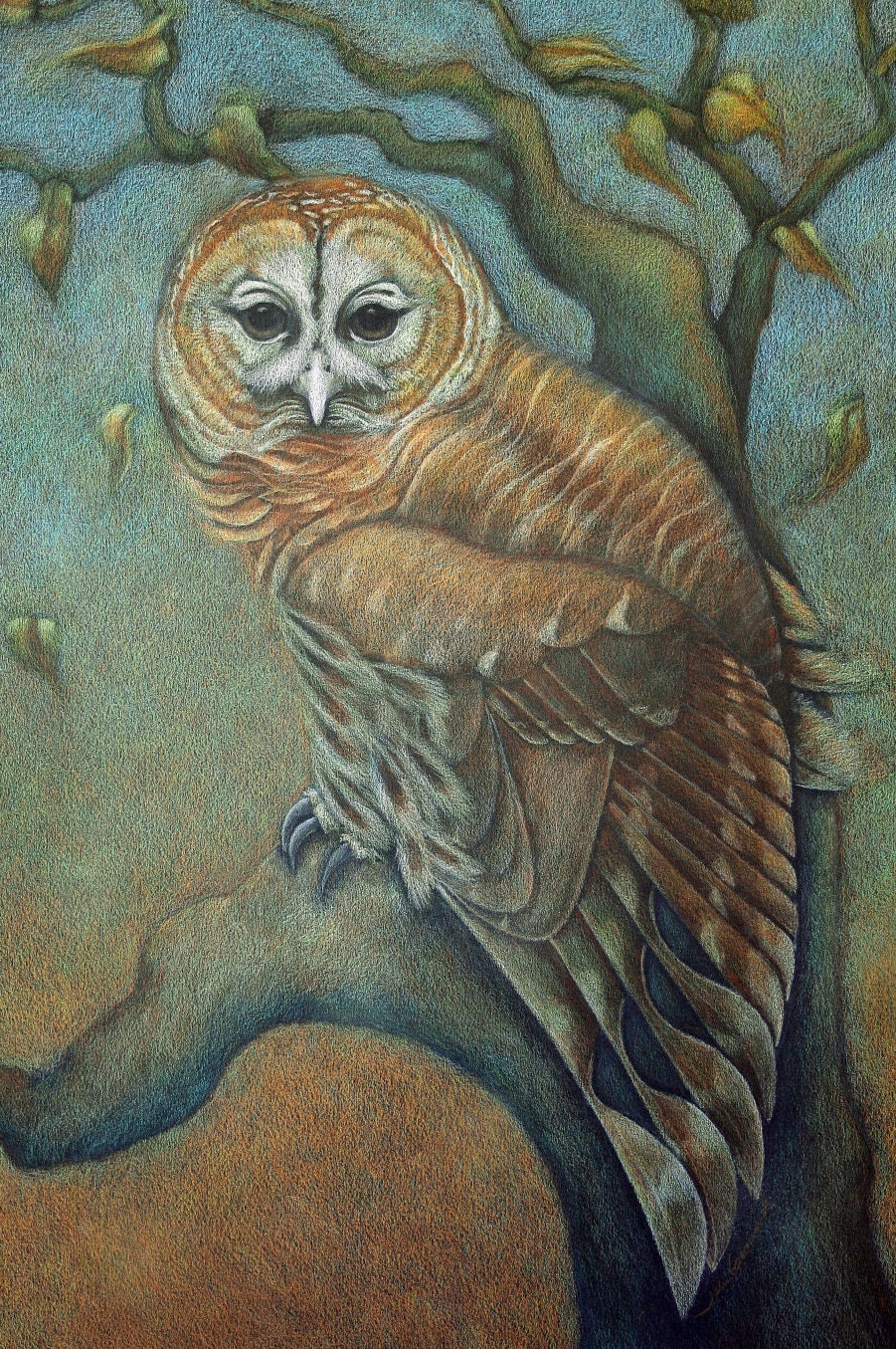 It's just a photo of Eloquent Barred Owl Drawing