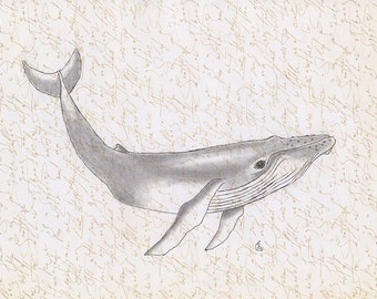 Whale art print, original pencil drawing