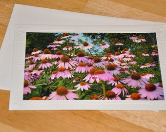 Photo Greeting Card - Coneflowers