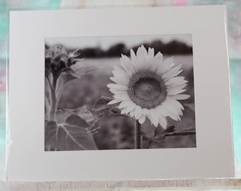 Black and White Sunflower photo, matted
