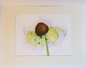 Jade Coneflower Watercolor
