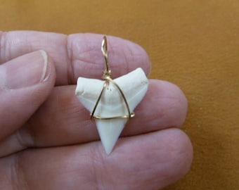 """15/16"""" Modern Oceanic White Tip SHARK Tooth GOLD wired pendant with 20"""" black suede necklace S23-A"""