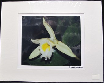 R. Lewis Hooten Uncommon Images Photograph Light Yellow Orchid Signed and Matted