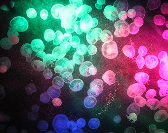Beautiful Jellyfish Floating Through Colorful Lights