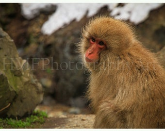 Snow Monkey Photography Immediate Download