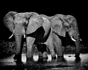 Elefanten Wildlife Fotografie Elefant Dekor afrikanischen Elefanten Natur Fotografie Elefant Tier Fotografie Natur Wand Fotokunst Männer Geschenk
