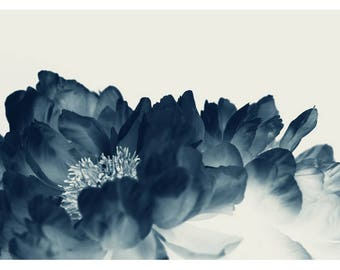 Flower Photograph - Peony Print - Floral Print - Botanical Photograph - Blue Paeonia #1 - Fine Art Photograph - Cyanotype - Wall Art - Blue