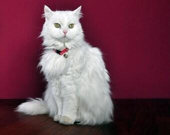 Safety CAT collar