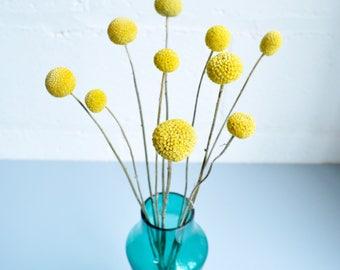 Craspedia / BIlly Balls / BIlly Buttons / Dried Yellow Flowers / Yellow Pom Pom / 10 Stems / Mother's Day / Housewarming / Wedding Flowers