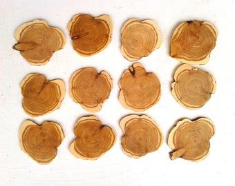 Thin Mountain Cedar Slices, 12 pieces