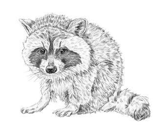 Raccoon Print, Baby Animal Print, Woodland Animal Nursery Art, Woodland Baby Animal, Baby Animal Nursery Art, Baby Woodland Animals, Raccoon