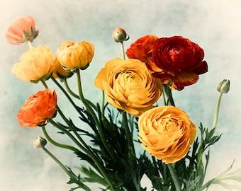 Ranunculus Flower Photography, Red Orange Decor, Floral Wall Art, Fine Art Print