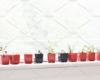 Styled Stock Photo | Small Succulents On Window | Blog stock photo, stock image, stock photography, blog photography